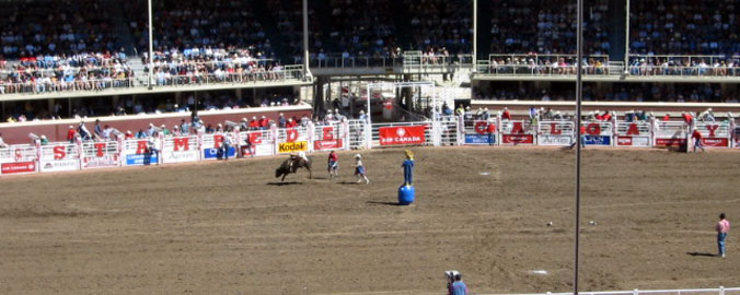 Calgary Stampede - Bull Riding